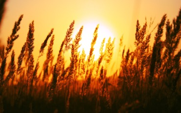 -sun-rise-wide-
