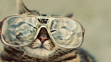 Cute-Cat-With-Glasses