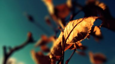 Autumn-Leaf-Macro