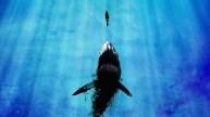 Big-Shark-Artwork-Blue-Wallpaper