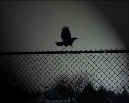 Bird-Fence-DArk