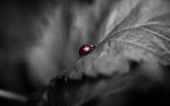 Colored-Ladybug