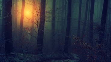 Light-Trough-Dark-Forest-Wallpaper