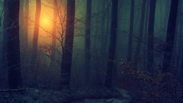 Light-Trough-Dark-Forest-Wallpaper