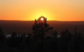 Pine-Forest-Sunset