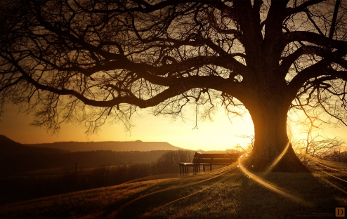 Tree-Sunset-HD-Nature-HD-Wallpaper