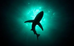 underwater-predator