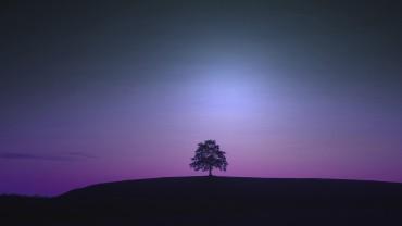 Violet-Night-Tree