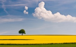 Yellow-Field-and-Clouds