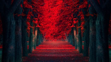 Black-Trees-Red-Leaves-Alley
