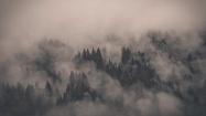 Monotone-Forest-Fog