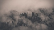 Monotone-Forest-Fog