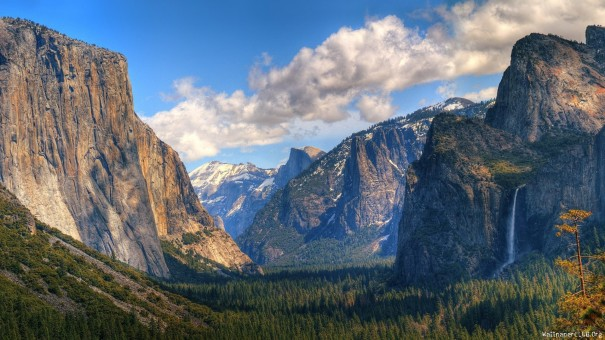 Pine-Forest-and-Mountains-in-Yosemite-National-Park