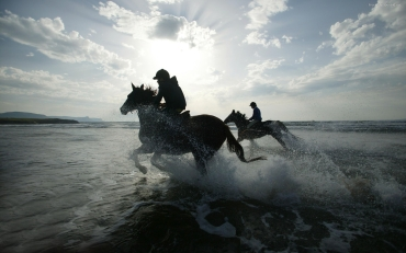 running-horses-on-the-beach-widescreen-free-hd