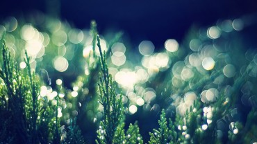 Shiny-Green-Plants-and-Light-Dots