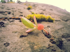 Life on a Natural Rock