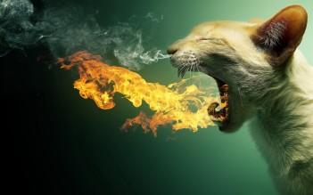 Fire-Spitting-Cat