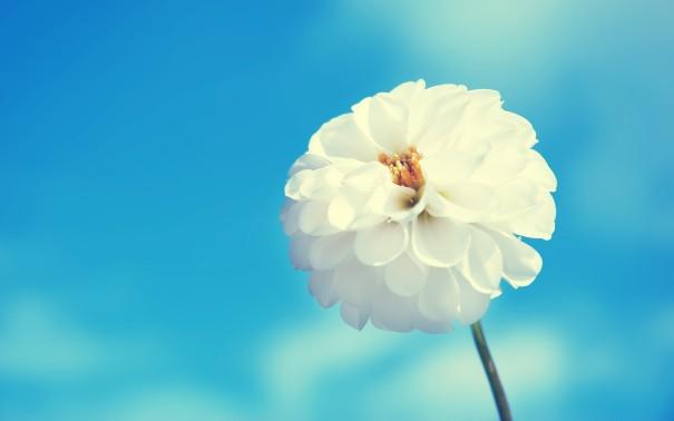White-Flower-Blue-Sky