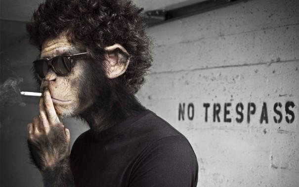 No-Trespass-Ape