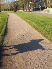 Shadow dog