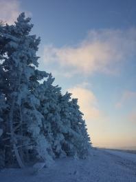 Powdered nature
