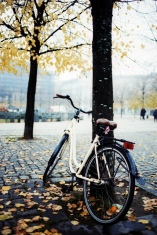 tree-bicycle-fall-lean-on-me