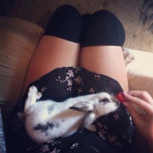 bunny - on - lap