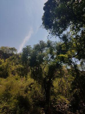 Victoria Falls Green and Sky
