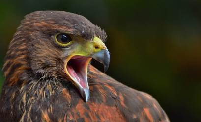 Most-Beautiful-Animals-Photography-eagle