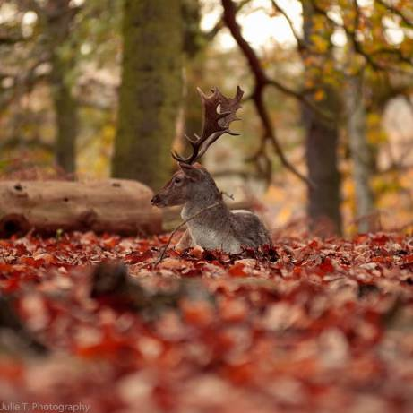 Most-Beautiful-Animals-Photography-deer