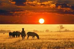 Most-Beautiful-Animals-Photography-zebra