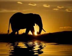 Most-Beautiful-Animals-Photography-elephant