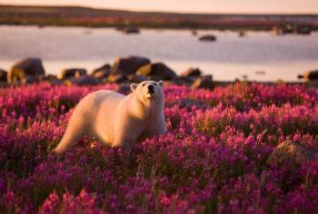 Most-Beautiful-Animals-Photography-polar-bear