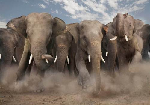 Most-Beautiful-Animals-Photography-elephants