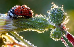 Most-Beautiful-Animals-Photography-lady-bug