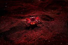 Most-Beautiful-Animals-Photography-crab