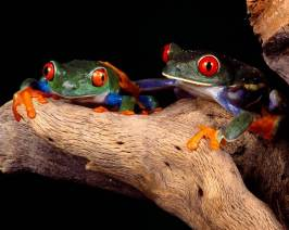 Most-Beautiful-Animals-Photography-frog
