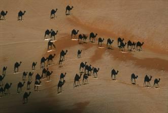Beautiful-animals-photographu-camel-shadows