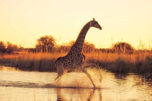 Running-On-Water