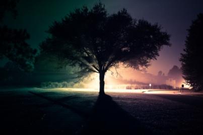 tree-divided-luminous-art