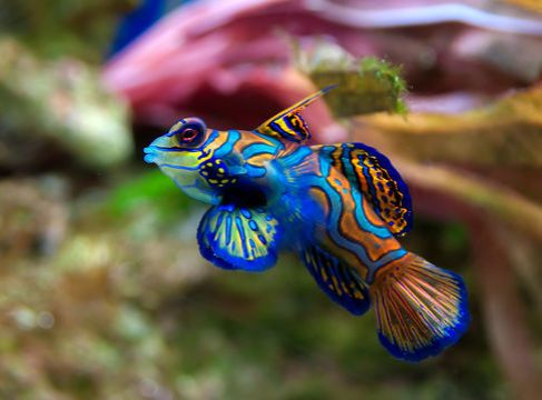 colourful-fish-beauty