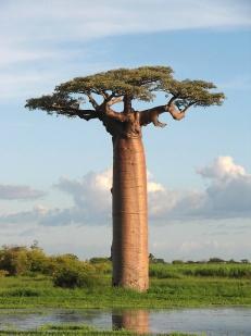 baobab-heaven