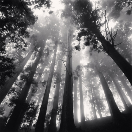 old-black-white-forest