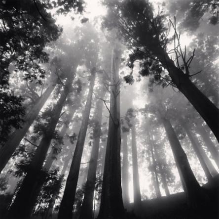 old-black-white-forest