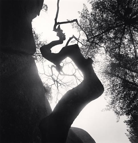 croocked-tree-black-white
