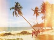 beach-palms-old