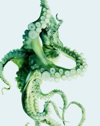 octo-art