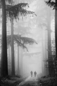 where-the-fog-dies