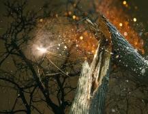 dream-wood